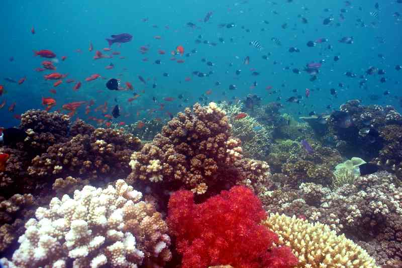 Best Places to Scuba Dive in Fiji