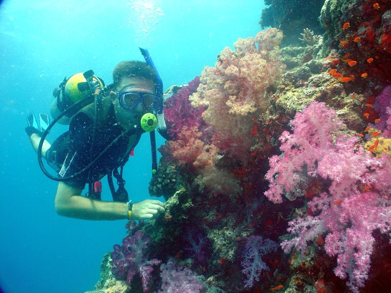 liveaboard diving in fiji