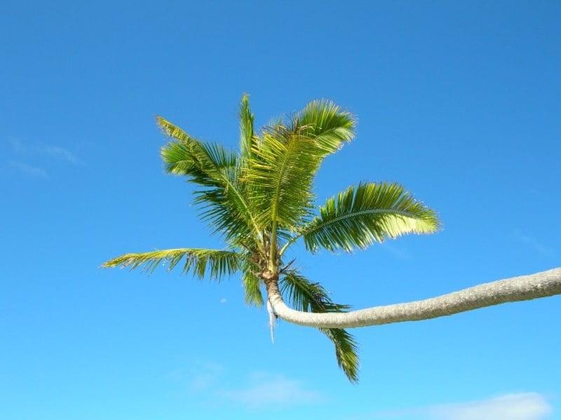 sunny weather in fiji