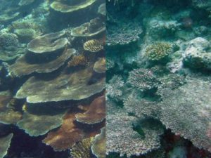 Ocean Acidification - Destabilizing Marine Environments