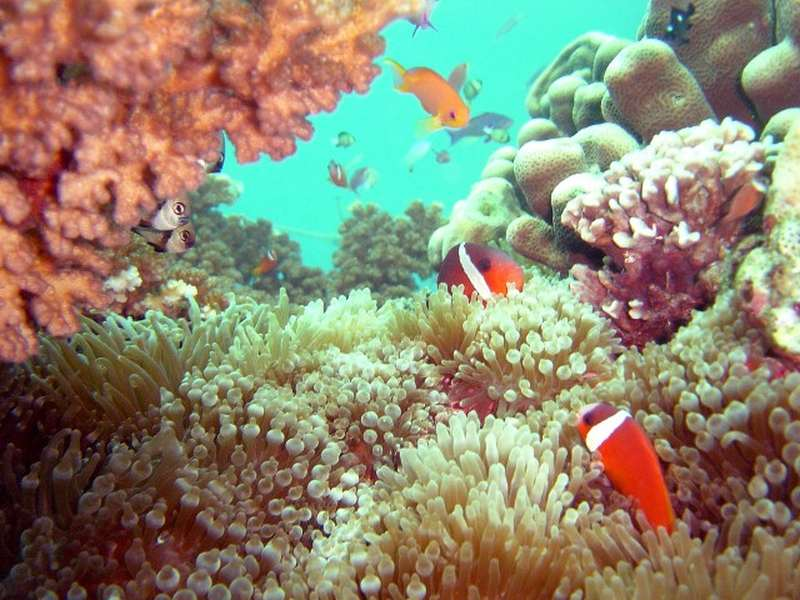 blue carbon stored in marine life